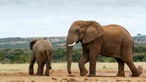 Αυτό είναι η κίνηση νερού μου - αφρικανικός ελέφαντας του Μπους Στοκ εικόνα με δικαίωμα ελεύθερης χρήσης
