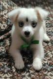 Αυτό είναι σκυλάκι cutepie Στοκ φωτογραφίες με δικαίωμα ελεύθερης χρήσης