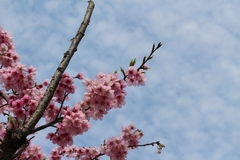 Αυτό που είναι το όνομα αυτού του λουλουδιού Στοκ εικόνες με δικαίωμα ελεύθερης χρήσης
