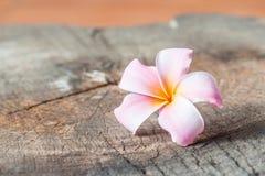 Αυτό το λουλούδι, frangipani ή plumeria Στοκ φωτογραφία με δικαίωμα ελεύθερης χρήσης