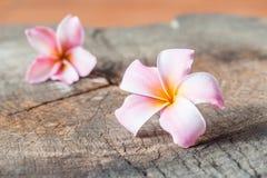 Αυτό το λουλούδι, frangipani ή plumeria Στοκ Φωτογραφίες
