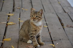 Αυτό το περίεργο γατάκι Στοκ φωτογραφία με δικαίωμα ελεύθερης χρήσης