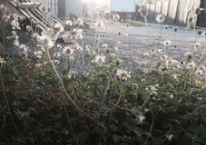 Αυτό το φρέσκο πρωί Στοκ φωτογραφία με δικαίωμα ελεύθερης χρήσης
