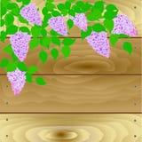 Αυτό ` s μια πασχαλιά στο υπόβαθρο μιας ξύλινης ασπίδας ελεύθερη απεικόνιση δικαιώματος