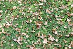 Αφήνει τα ξηρά, ξηρά φύλλα στο χορτοτάπητα, ξηρά φύλλα υποβάθρου στη χλόη στον κήπο Στοκ φωτογραφία με δικαίωμα ελεύθερης χρήσης