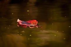 Αφήνει το μεταβαλλόμενο χρώμα στη λίμνη στοκ φωτογραφία με δικαίωμα ελεύθερης χρήσης