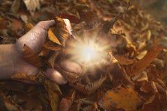 Αφή του φωτός στη φύση στοκ εικόνα με δικαίωμα ελεύθερης χρήσης