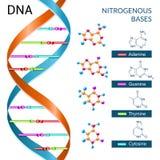 Αφίσα βάσεων DNA διανυσματική απεικόνιση