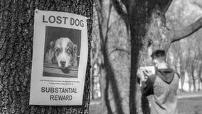 Αφίσες συγκόλλησης εφήβων των ελλειπόντων σκυλιών στοκ εικόνες με δικαίωμα ελεύθερης χρήσης