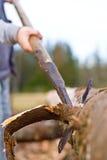 αφαίρεση κούτσουρων φλ&omicr Στοκ φωτογραφίες με δικαίωμα ελεύθερης χρήσης