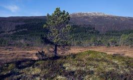 Αφηρημένα δέντρο και τοπίο Στοκ Φωτογραφία