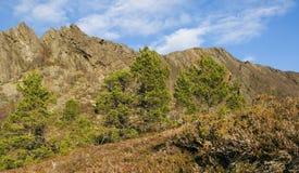 Αφηρημένα βουνό και pinaceae Στοκ Φωτογραφία