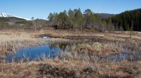 Αφηρημένα ερείκη και νερό Στοκ Φωτογραφία