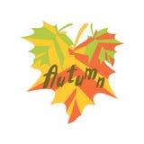 Αφηρημένα ζωηρόχρωμα φύλλα σφενδάμου Στοκ Εικόνες