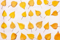 Αφηρημένα κίτρινα φύλλα φθινοπώρου σε μια σειρά Στοκ Φωτογραφίες