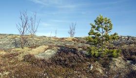 Αφηρημένα κορυφή υψώματος και δέντρα Στοκ Φωτογραφίες