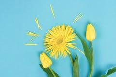 αφηρημένα λουλούδια ανασκόπησης Κίτρινα τουλίπες και λουλούδια gerbera στο μπλε υπόβαθρο Στοκ Εικόνες