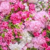 αφηρημένα λουλούδια ανα&si Στοκ εικόνα με δικαίωμα ελεύθερης χρήσης