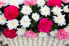 αφηρημένα λουλούδια ανα&si Στοκ Εικόνες