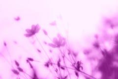 Αφηρημένα λουλούδια θαμπάδων για το υπόβαθρο Στοκ Φωτογραφία