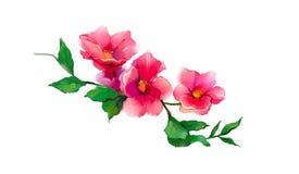 Αφηρημένα λουλούδι και φύλλο ελαιογραφίας Απεικόνιση που απομονώνεται της άνοιξης, σχέδιο χρωμάτων θερινών λουλουδιών πέρα από το απεικόνιση αποθεμάτων