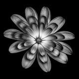 αφηρημένα μαύρα λουλούδι&alp Στοκ Φωτογραφία