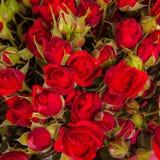 αφηρημένα λουλούδια ανα&si Κινηματογράφηση σε πρώτο πλάνο Στοκ Φωτογραφία