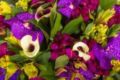 αφηρημένα λουλούδια ανα&si Κινηματογράφηση σε πρώτο πλάνο Στοκ φωτογραφίες με δικαίωμα ελεύθερης χρήσης
