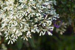 Αφηρημένα λουλούδια Pascuita παραθύρων κειμένου Στοκ φωτογραφίες με δικαίωμα ελεύθερης χρήσης
