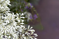 Αφηρημένα λουλούδια Pascuita παραθύρων κειμένου Στοκ Φωτογραφίες