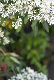 Αφηρημένα λουλούδια Pascuita παραθύρων κειμένου Στοκ Εικόνες
