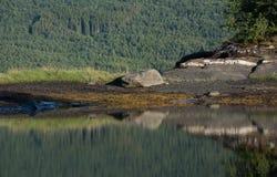 Αφηρημένα πέτρα και δέντρα Στοκ Φωτογραφία