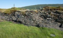 Αφηρημένα πέτρα και pinaceae Στοκ Φωτογραφία