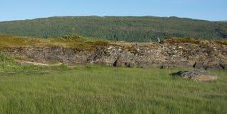 Αφηρημένα πέτρα και pinaceae Στοκ φωτογραφία με δικαίωμα ελεύθερης χρήσης