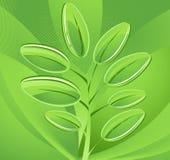 αφηρημένα πράσινα φύλλα ανα&s Στοκ Φωτογραφία