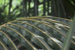 Αφηρημένα πράσινα φύλλα καρύδων Στοκ Φωτογραφίες