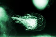 Αφηρημένα πλάσματα θάλασσας Στοκ φωτογραφία με δικαίωμα ελεύθερης χρήσης