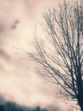 αφηρημένα σύννεφα Στοκ Φωτογραφίες
