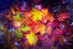 αφηρημένα φθινοπώρου φύλλα φύλλων πλαισίων ανασκόπησης ζωηρόχρωμα Στοκ φωτογραφίες με δικαίωμα ελεύθερης χρήσης