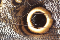αφηρημένα φτερά λεπτομέρειας πεταλούδων Στοκ Φωτογραφία