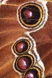 αφηρημένα φτερά λεπτομέρειας πεταλούδων Στοκ Εικόνες