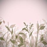 αφηρημένα φυτά στοκ εικόνα με δικαίωμα ελεύθερης χρήσης