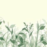 αφηρημένα φυτά Στοκ Εικόνες
