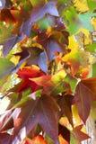αφηρημένα φύλλα ανασκόπησης φθινοπώρου στοκ φωτογραφία