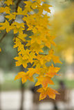 αφηρημένα φύλλα ανασκόπησης φθινοπώρου Στοκ Εικόνες