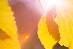 αφηρημένα φύλλα ανασκόπηση&s Στοκ φωτογραφία με δικαίωμα ελεύθερης χρήσης