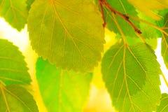 αφηρημένα φύλλα ανασκόπηση&s Στοκ Εικόνα