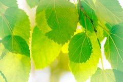 αφηρημένα φύλλα ανασκόπηση&s Στοκ φωτογραφίες με δικαίωμα ελεύθερης χρήσης