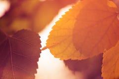 αφηρημένα φύλλα ανασκόπηση&s Στοκ Φωτογραφία