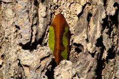 Αφηρημένα φύλλα με το φλοιό Στοκ φωτογραφία με δικαίωμα ελεύθερης χρήσης